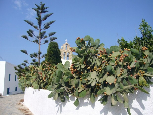 Aus dem Garten eines typischen Hauses ragende Pflanzen