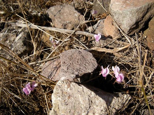 Die ersten Blumen blühen
