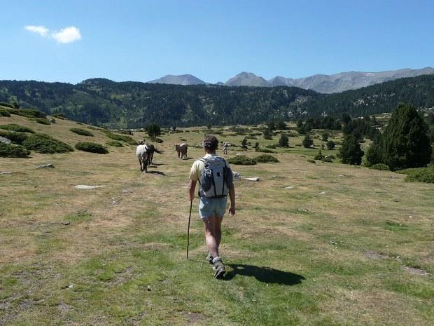 Wandern auf einer Wiese zwischen Kühen