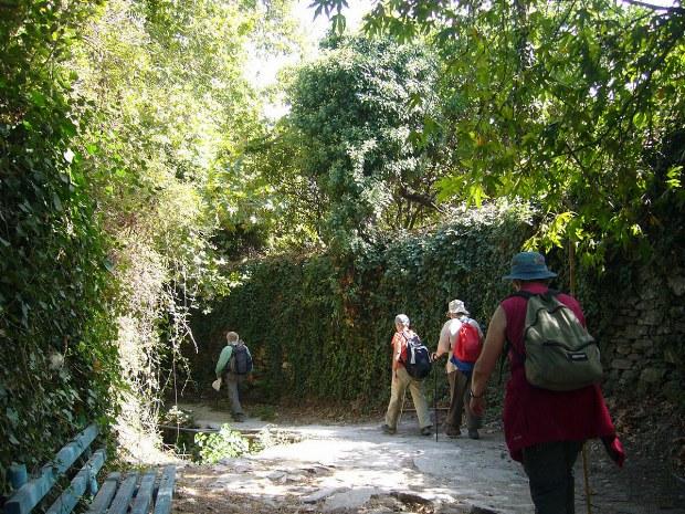 Menschen gehen entlang von Efeu und anderen Bäumen spazieren
