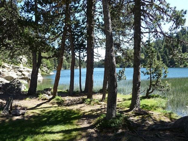 Zwischen den Bäumen auf einer Lichtung gibt es einen See
