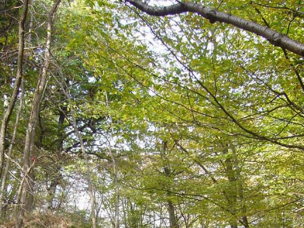 Herbstlicher Weg durch den Wald