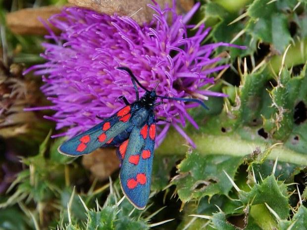 bunter Schmetterling sitzt auf einer Blume